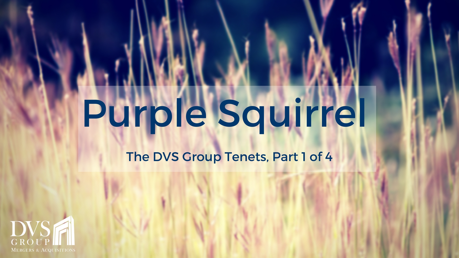 The DVS Group Tenets - Purple Squirrel